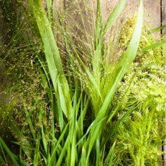 Eau de toilette herbes sauvages Candora Paris