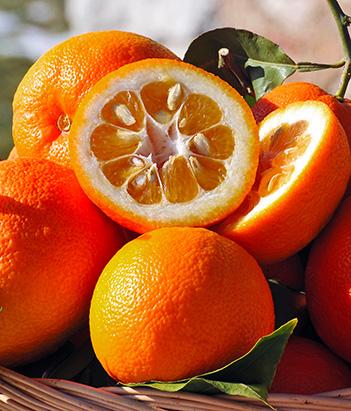 Eau de Toilette Orange Bigarade